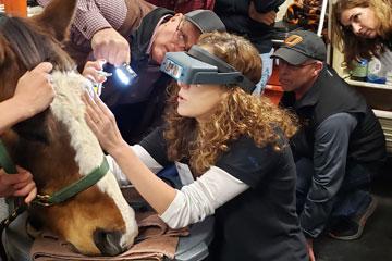 OSU Vet Med Hosts Equine Seminar