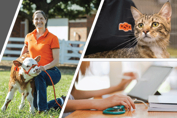 OSU Veterinary College Moves Annual Fall Conference Online