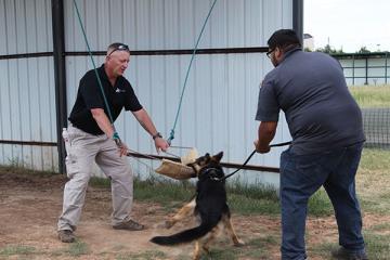 Veterinary Center Offers Canine Athletic Program