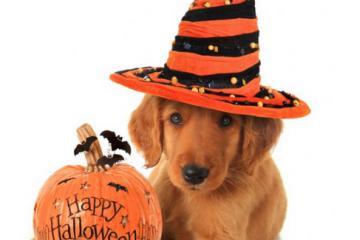 Make Halloween Safer for Pets