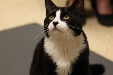 Whisker Fatigue in Cats