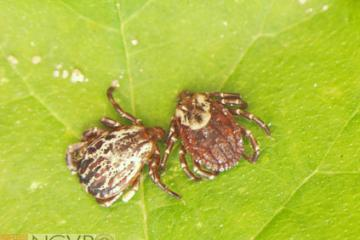 Ticks: What You Need to Know