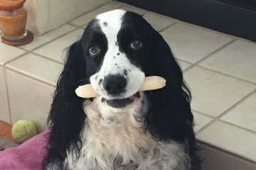 OSU research saves Florida dog