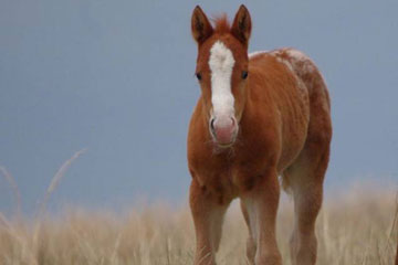 First Case of Vesicular Stomatitis Confirmed in Oklahoma